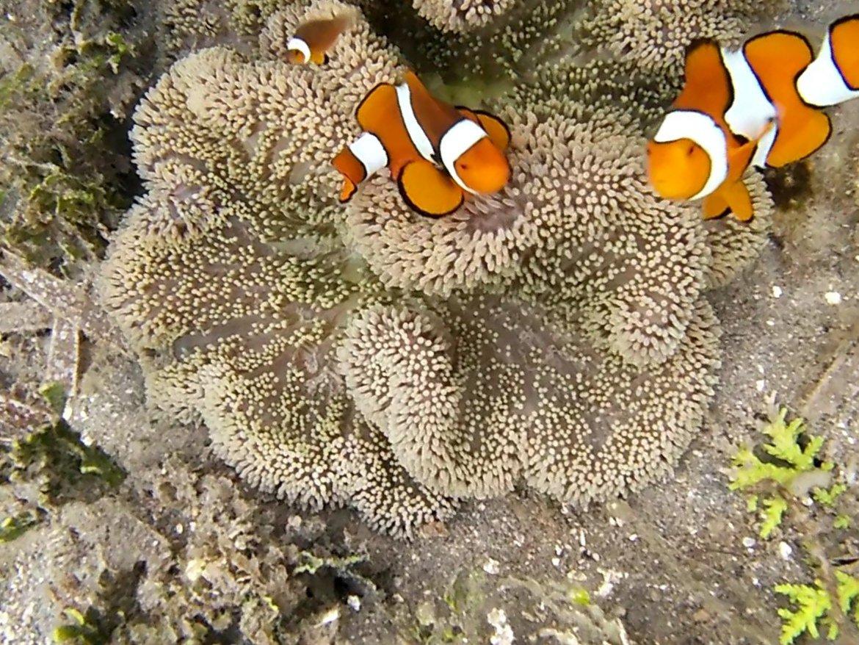 Le monde de Nemo (Tumbak, du 21 au 24juin)