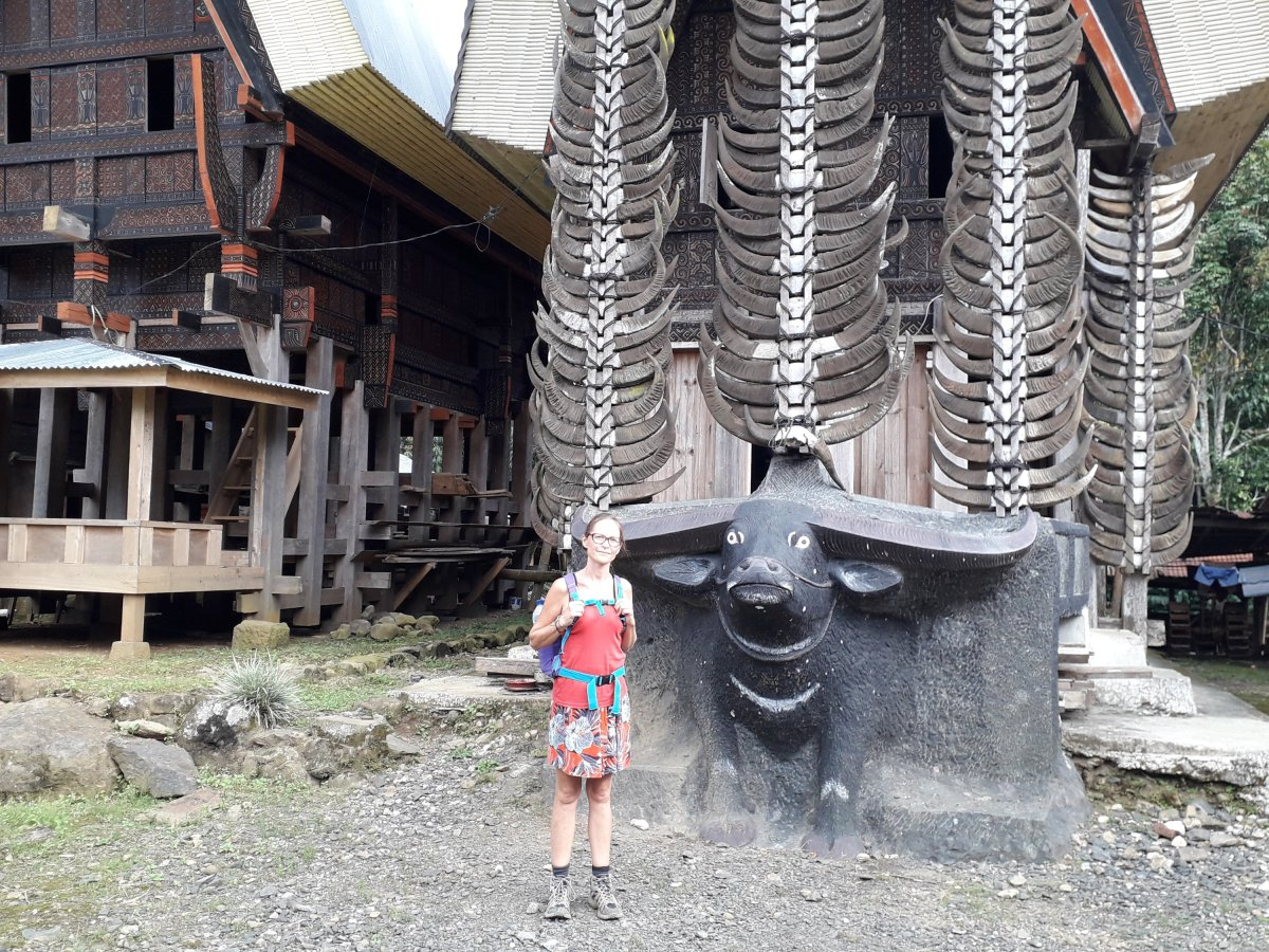 Pays Toraja (suite) : Red Bull!